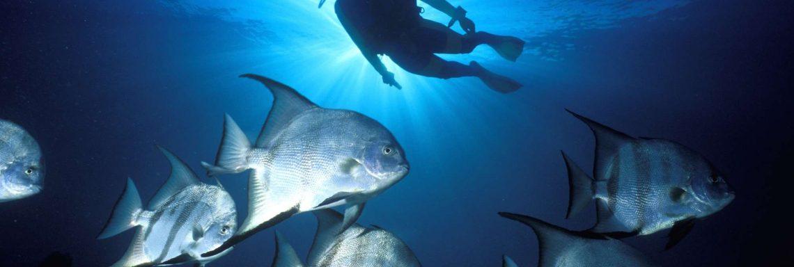 Activité de plongé sous-marine dans le paradis.