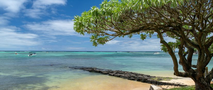 Vue de la plage avec un arbre sur l;océan indien