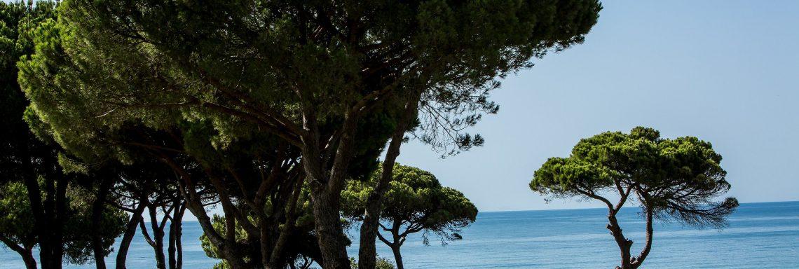 Club Med Portugal Da Balaia - Arbres gigantesques sur le terrain du Village.