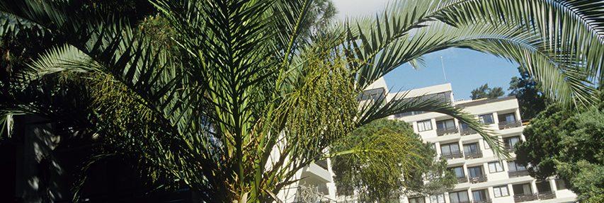 Club Med Portugal Da Balaia - Le complexe en biais